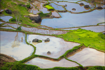 Rantepao rice fields- Sulawesi